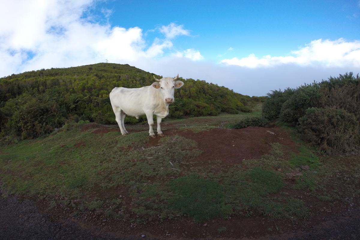 Madeira – Die Blumeninsel im Atlantik