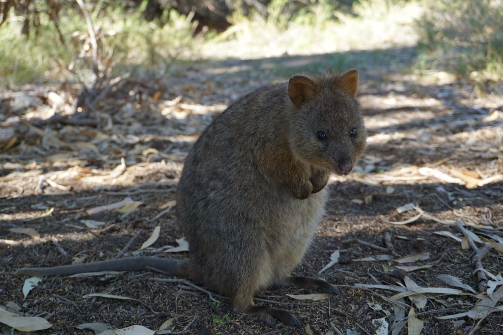 Australien Rundreise