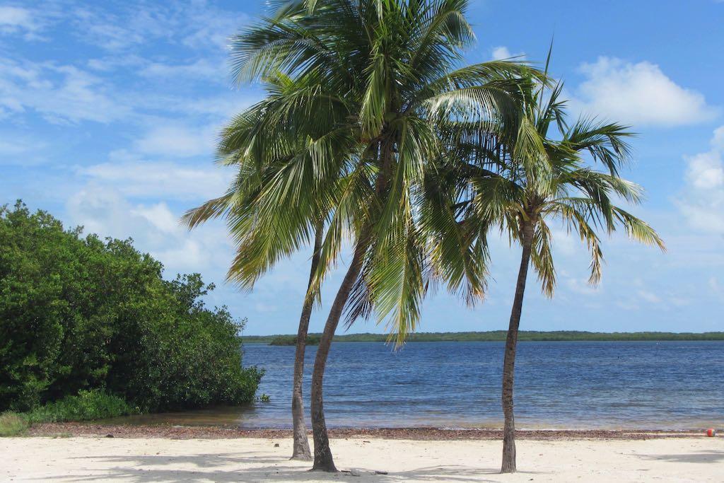 Bahia Honda State Park Strand mit Palmen